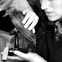 Donna non vedente che tocca un uccell impagliato